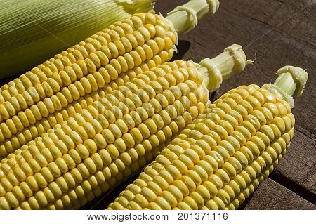 Fresh organic corn, sweet corn on rustic wooden background.Grains of ripe corn. An ear of corn isolated. Corn on the cob, meal ripe juicy tasty corn. Photo of corn background.Fresh young sweet corn on cobs, closeup. Freshly picked ears of corn in bunch.