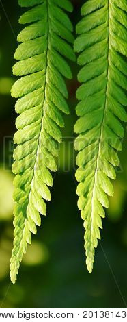 Close up of Fern in bright sunlight