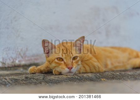 Ginger cat lying on concrete floor. Inattentive cute cat relaxing on concrete floor.
