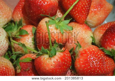 Fresh Fruit Close Up of Ripe and Sweet Strawberry High in Vitamin C Tablet Essential Nutrient for Life.