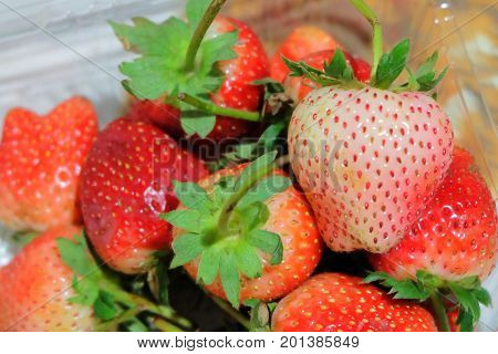 Fresh Fruit Close Up of Ripe and Sweet Strawberry in Plastic Box High in Vitamin C Tablet Essential Nutrient for Life.