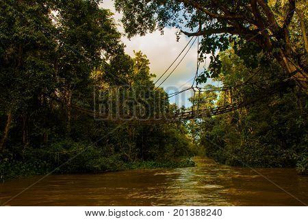 Evening Landscape Of Forests And Mesh. Kinabatangan River, Rainforest Of Borneo Island, Sabah Malays
