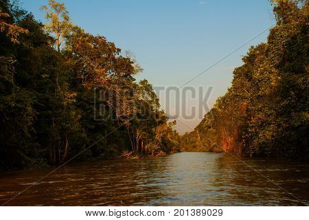 Kinabatangan River, Rainforest Of Borneo Island, Sabah Malaysia. Evening Landscape Of Trees Near The