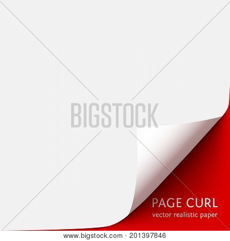 Curled corner of white paper with shadow on red background. Realistic vector paper page with curl corner and blank space for text