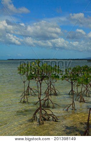 a small island across the beach to open sea at Panglao Island Nature Resort, Bohol