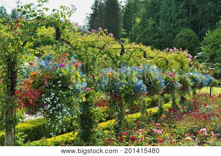 Hanging baskets hang beautifully full of flowers in the gardens