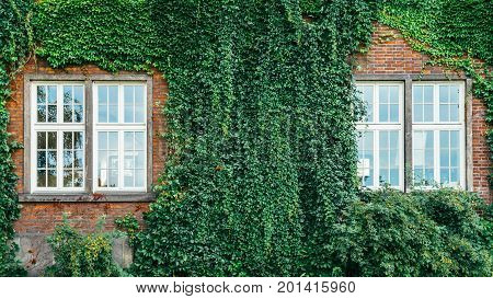 Old brick building full frame overgrown with ivy and shrubs