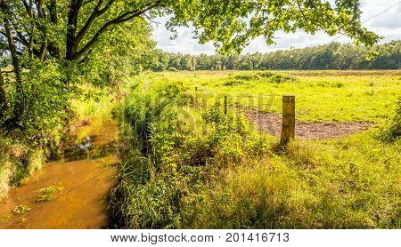 Idyllic landscape with a narrow stream on the border of grassland and a large forest. It is a sunny day in the summer season.