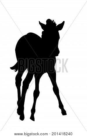 View on the silhouette of a Zebra Kitten - digitally hand drawn vector illustraion