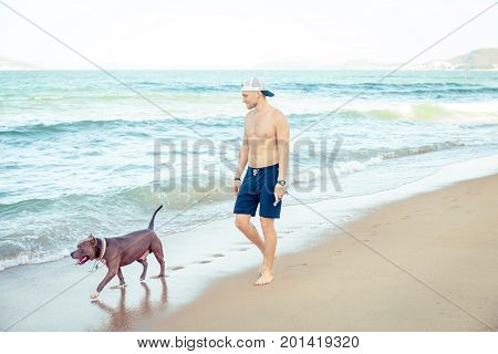 Young man with dog american pit bull terrier walking on the tropical beach. Man and dog strolling on seaside in the morning.