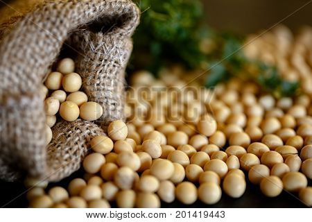 Close-up of healthy soybean on dark background in jute sack
