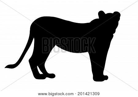 View on the silhouette of a female lion - digitally hand drawn vector illustraion