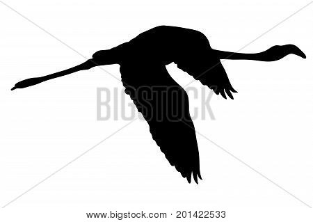 View on the silhouette of a flamingo - digitally hand drawn vector illustraion
