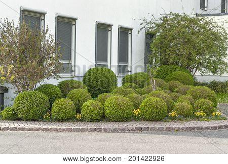 some spherical bushes seen in Bad Brueckenau a town in Northern Bavaria