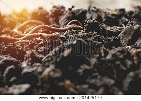 tree roots with dirty soil. Growing plant with root with sunny ray.