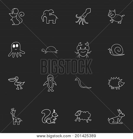 Set Of 16 Editable Zoology Doodles. Includes Symbols Such As Polar Bird, Tentacle, Rat And More poster