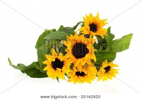 Bouquet yellow nature sunflowers  isolated over white