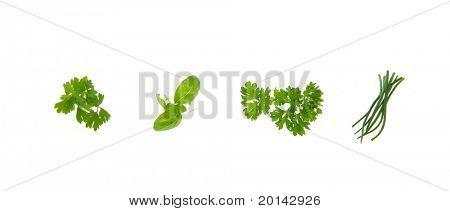 Various fresh kitchen herbs isolated on white background