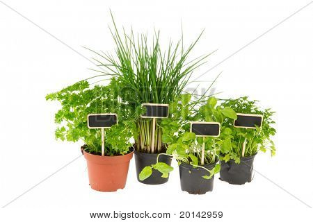 Kitchen herbs in pots with labels  isolated over white