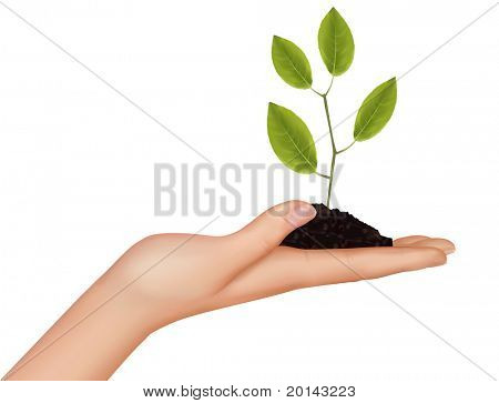 Person holding a young plant. Vector illustration.