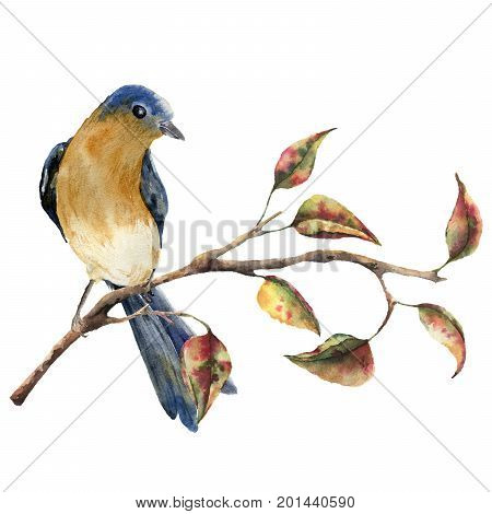 Watercolor robin redbreast sitting on tree branch with red and yellow leaves. Autumn illustration with bird and fall leaves isolated on white background. Nature print for design