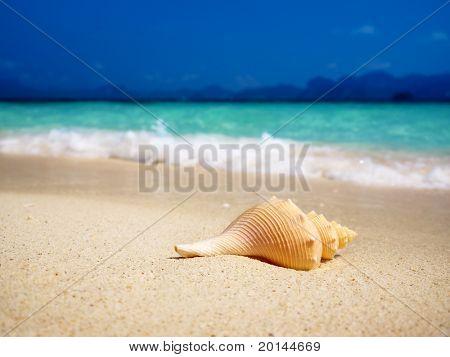 seashell on the beach(shallow DOF)