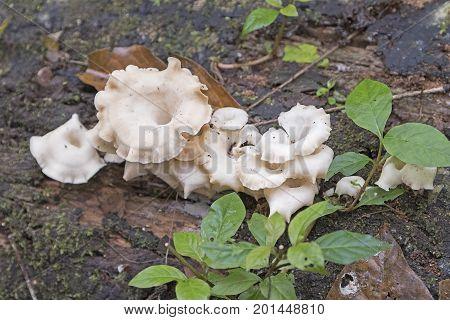Unusual Fungus in the Rain Forest in La Selva Biological Reserve in Costa Rica