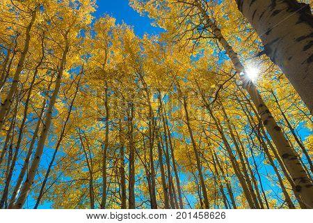 Beautiful Autumn In National Park