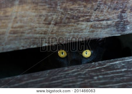 Cat eyes in darkness cat hiding under wooden.
