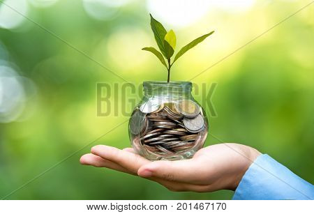 Businessman hand holding coin money cover growing plant. Plant growing out of coins with filter effect money growing and small tree in jar green nature background. Investment concept.