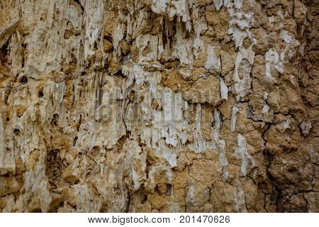 Decomposed, Broken down wood texture. Brownish yellowish color