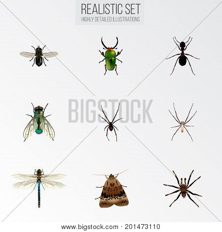 Realistic Spider, Damselfly, Insect And Other Vector Elements