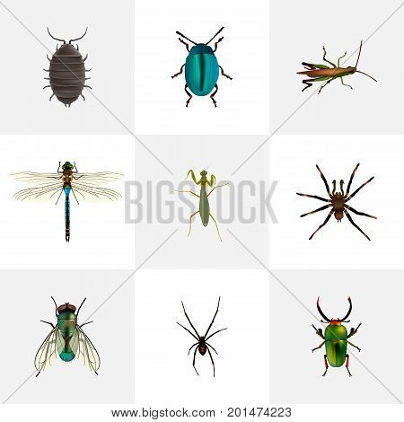 Realistic Bug, Dor, Arachnid And Other Vector Elements