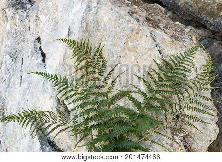 Sporulation of fern & grass & endemic