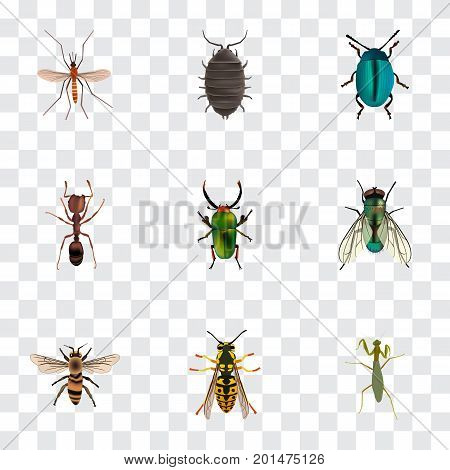 Realistic Housefly, Bug, Wasp And Other Vector Elements