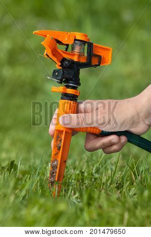 hand installing garden sprinkler for irrigation of lawn