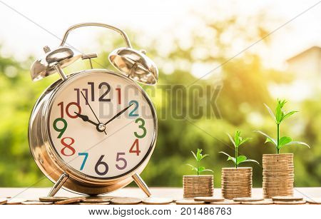 clock alarm and step of coins stacks with tree growing on top nature background money saving and investment or family planning concept over sun flare silhouette tone.