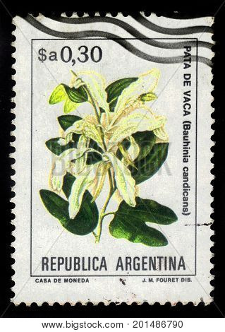 ARGENTINA - CIRCA 1983: a stamp printed in the Argentina shows bauhinia candicans ( pata de vaca ), often known as brazilian orchid tree, series, circa 1983