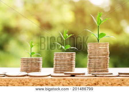step of coins stacks with tree growing on top nature background money saving and investment or family planning concept over sun flare silhouette tone.
