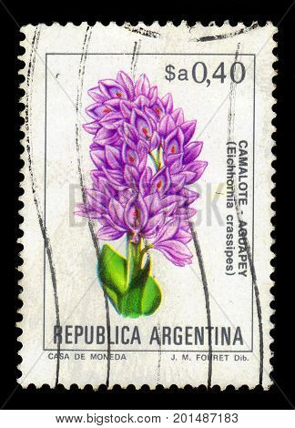 ARGENTINA - CIRCA 1983: a stamp printed in the Argentina shows eichhornia crassipes, known as water hyacinth, series, circa 1983