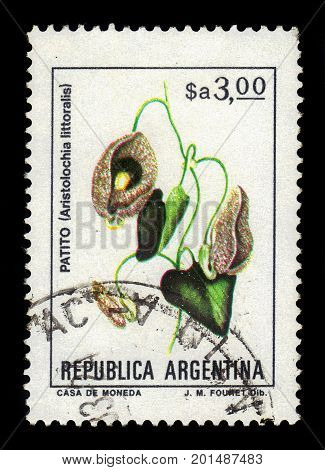 ARGENTINA - CIRCA 1983: a stamp printed in the Argentina shows patito ( aristolochia littoralis ), known as calico flower or elegant dutchman's pipe, series, circa 1983