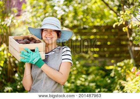 Young girl agronomist in hat with box of potatoes in summer