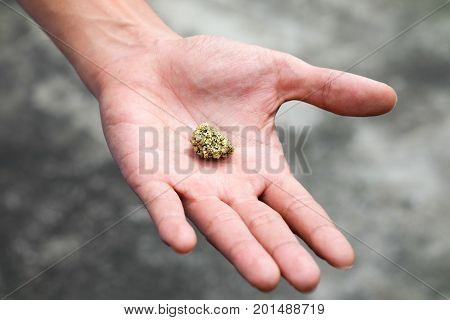 The pure gold ore found in the mine is in the hands of men.