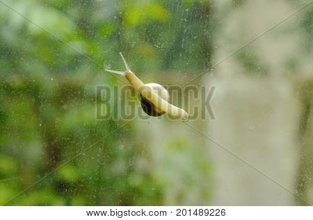 snail crawling slowly on glass door with garden background