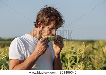 Young farmer tasting ripe corn cob at corn field. Men holding corn cob in hands and biting it.