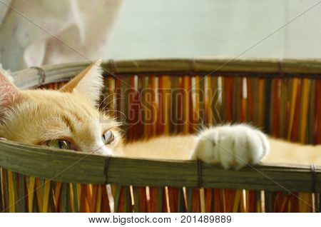 ginger cat sleepy in woven basket and lift up paw on rim