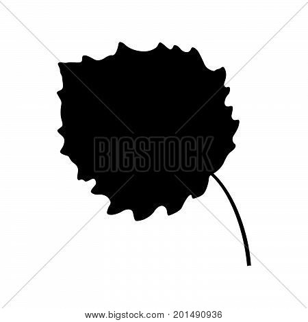 Leaf of a aspen tree, shade picture