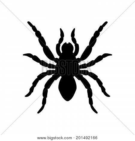 Tarantula, trapdoor spider, ground spider, wolf spider