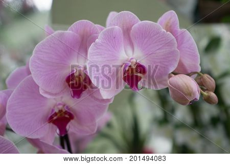 Colourful Orchid Flowers With Beautiful Background On A Bright Summer Day