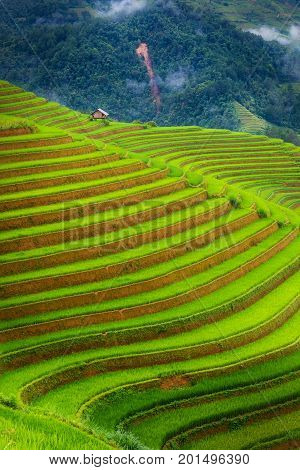 Layers of terrace with rice field Natural and lifestyle.